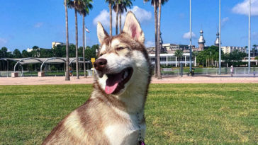 Smiling dog at a Tampa park photo