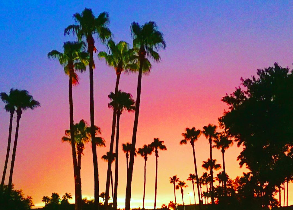 Photo of silhouette of palm trees