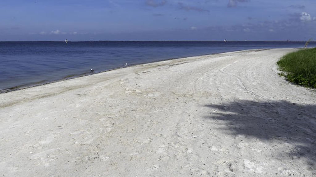 photo of a beach with a grassy area to the side